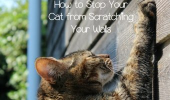 4 Tips to Stop Cats from Scratching Up Your Walls & Furniture