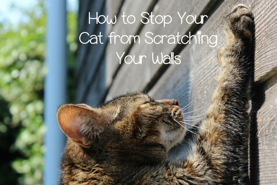 4 Tips To Stop Cats From Scratching Up Your Walls