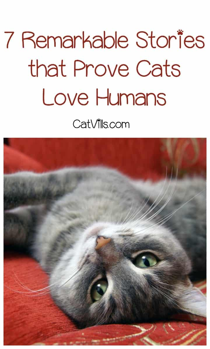 Wondering if your kitty really cares about you? Stop wondering and check out these 7 remarkable stories that prove cats love humans!