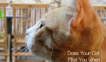 Do Cats Miss Their Owners When They Are Apart?