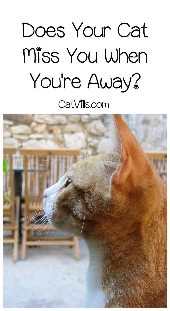 Do cats miss their owners when they're not around? It's something we all wonder as we head out the door for work. Find out the answer!