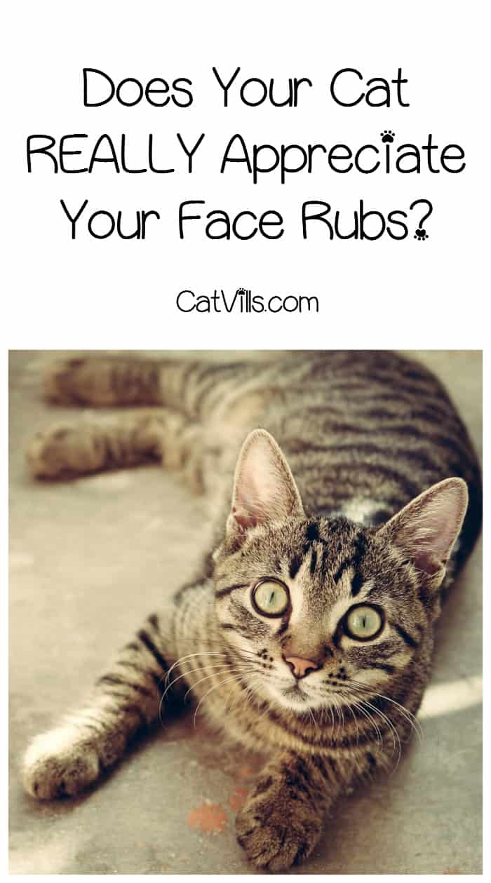 Does your cat really like it when you rub your face on him the way he does to you? Check out our cat health tips to find out the truth about face rubbing!