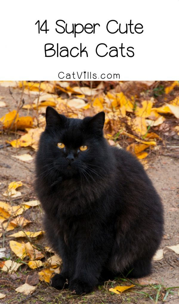 Love black cats as much as we do? You'll really adore these 14 super cute pictures of black kitties being their darling selves! Check them out!