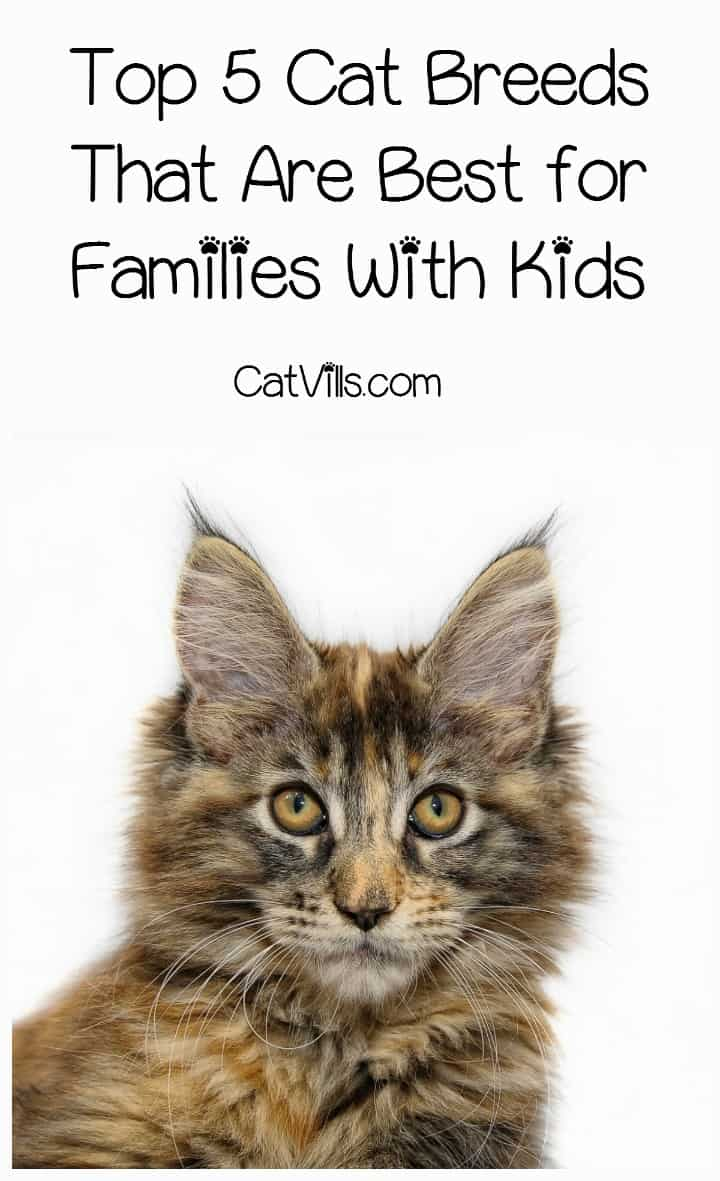 What are the best cat breeds for children? While just about any type of cat can form a bond with your kids, these five are best know for it! Check them out!