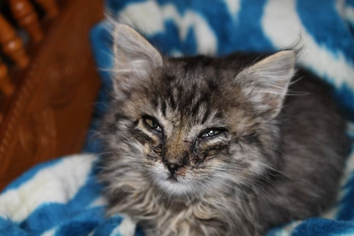 What do you do if you find a sick kitten? Check out our cat health tips for getting that kitty the help he needs most!