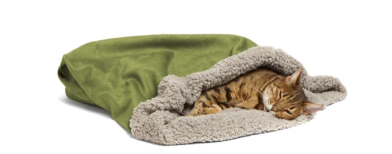 Keep kitty comfy throughout her entire pregnancy with a plush cat bed and cozy blankets. You'll want something low to the ground, so she's not forced to jump, especially towards the end of her pregnancy.