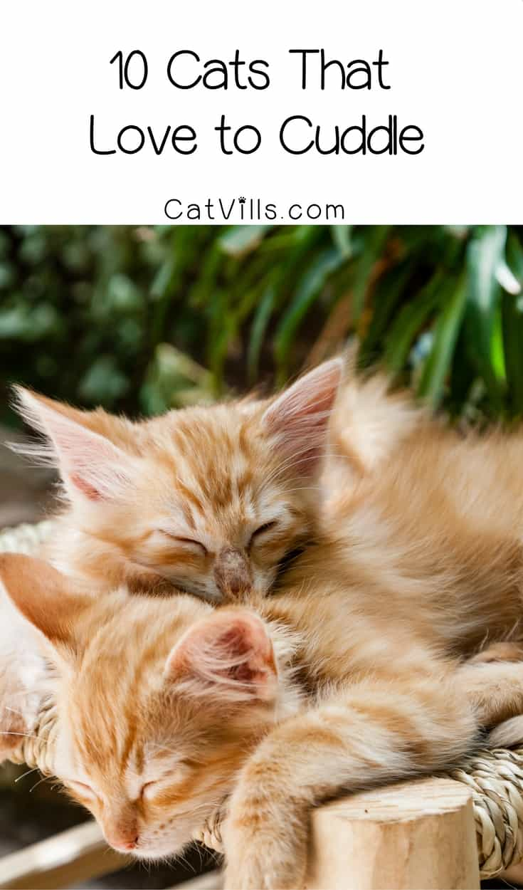What's almost as good as cuddling with your kitty? How about insanely cute cat pictures of kitties who love to cuddle, too!