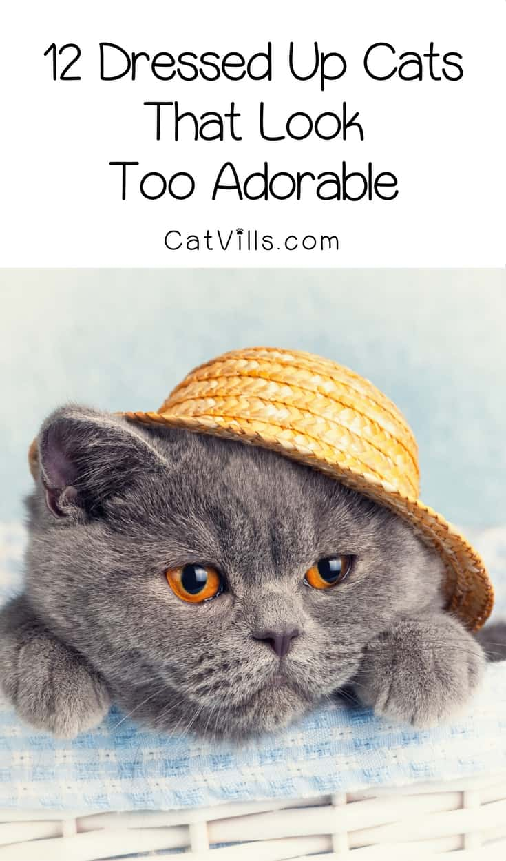 Cats rarely tolerate playing dress up, so when they do it's over-the-top cute. Check out 12 dressed up cats that look just too adorable!