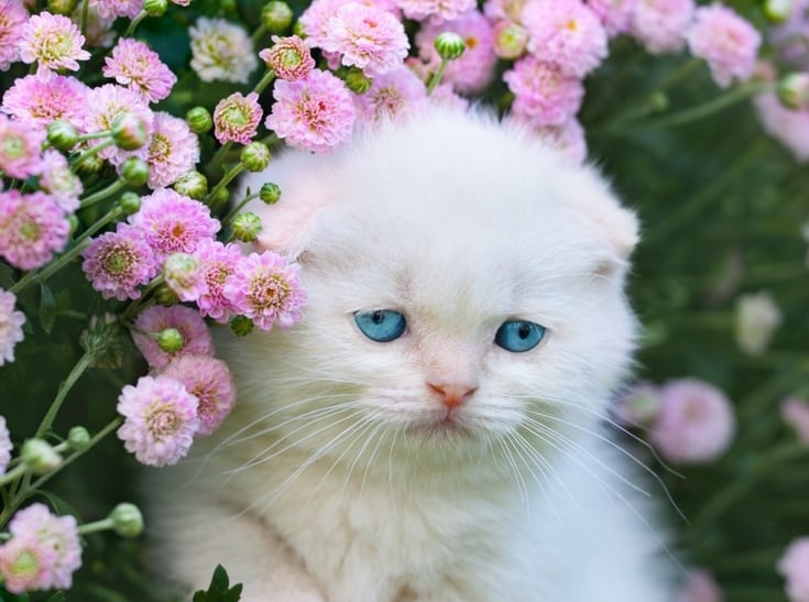 12 of the Seriously Most Adorable Kittens