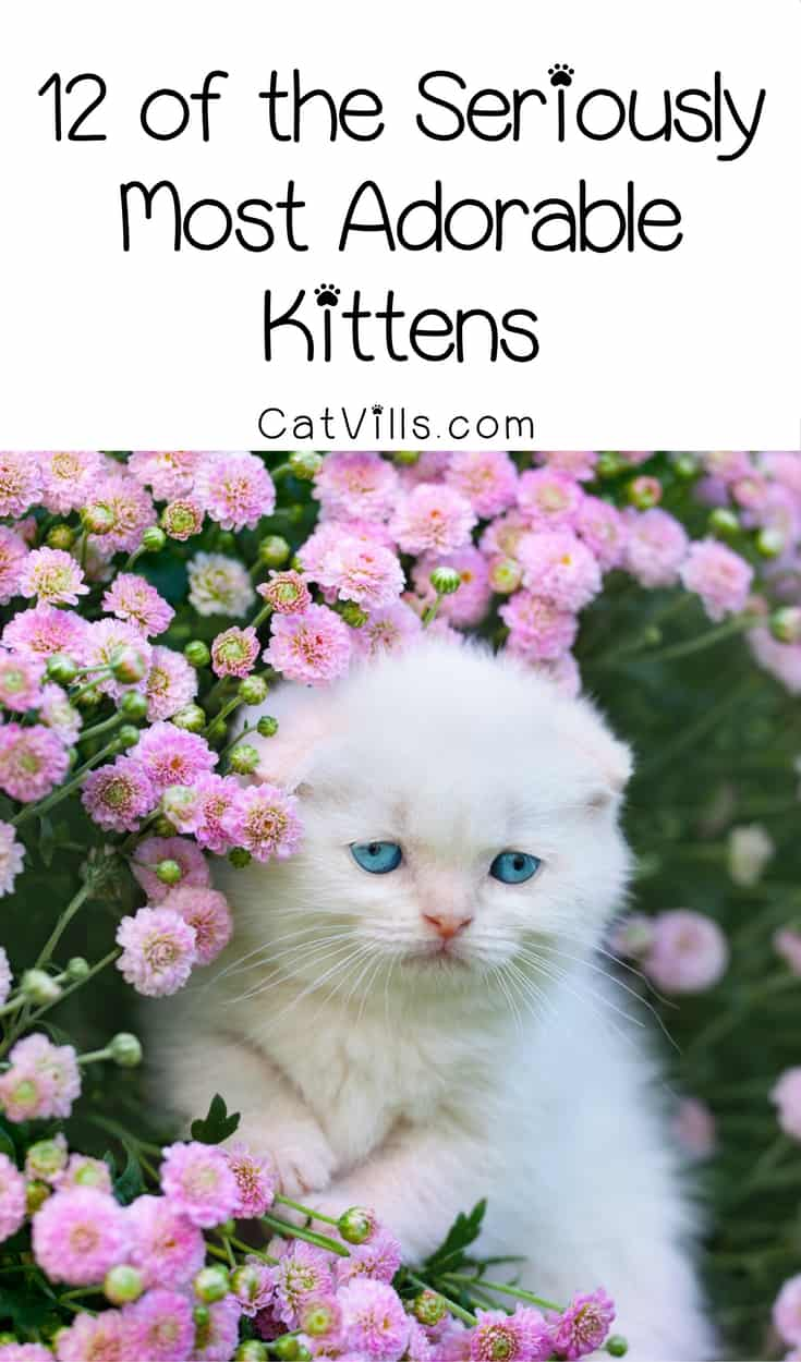 Get ready for some cuteness overload with the cat pictures! We've found 12 of the most adorable kittens on the internet! Check them out!