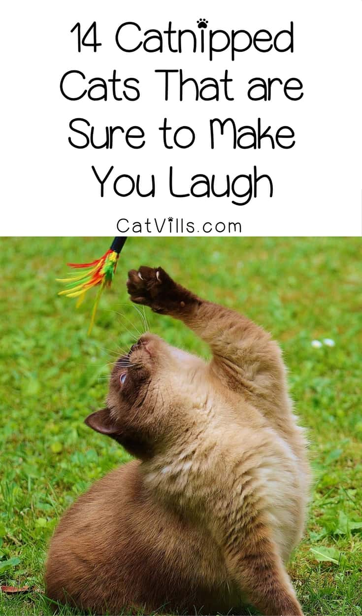Need a good laugh? These 14 catnipped cats are sure to have you ROTFL in no time! Check them out!