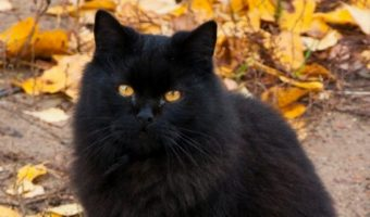14 Super Cute Black Cats