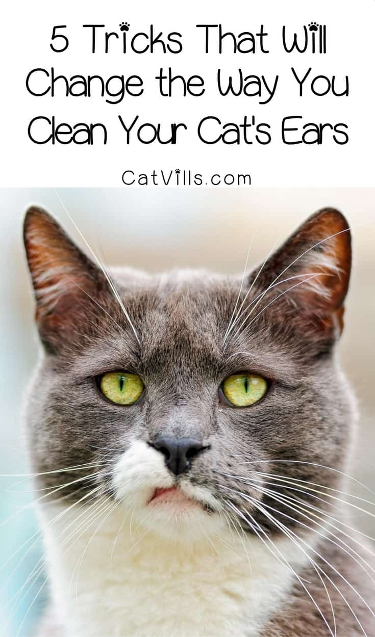 How to clean cat ears: Protect your kitty's hearing and get the gunk out with these five tricks that will change the way you clean your cat's ears. Check them out!