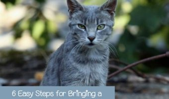 6 Easy Steps for Bringing a Stray Cat Home