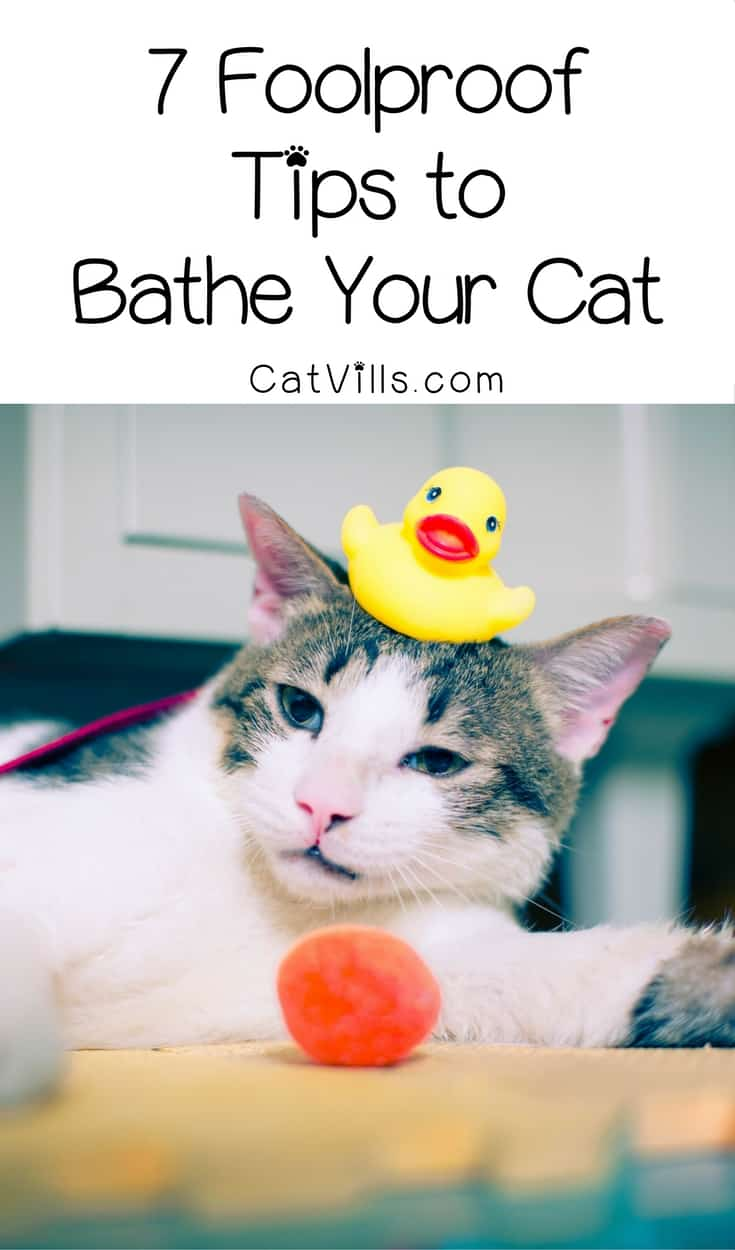 Bathe your cat? No, seriously! Stop laughing! You totally can do it! We've got 7 foolproof tips to get kitty clean without losing an eye. Check them out!