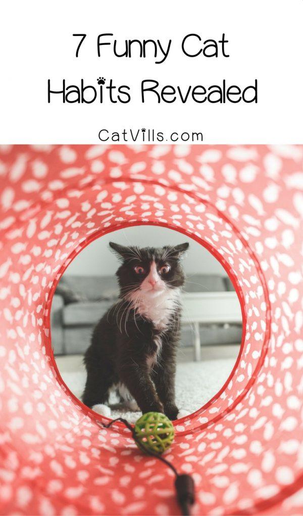 7 Funny Cat Habits Revealed