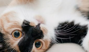 7 Best Cat Hacks Every Kitty Parent Needs to Know