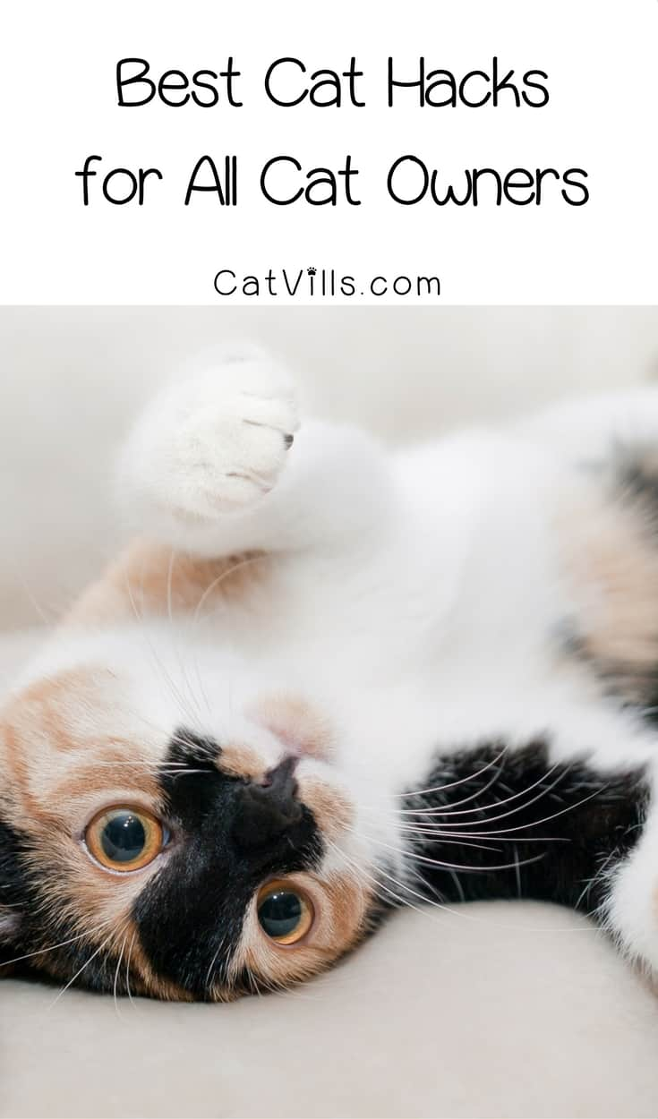 Need a few shortcuts for taking care of your kitty? Check out these all-time best cat hacks for all cat owners!