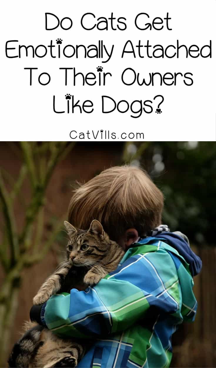 Wondering if cats get emotionally attached to their owners like dogs do? While most people think they don't, the answer may surprise you! Check it out!