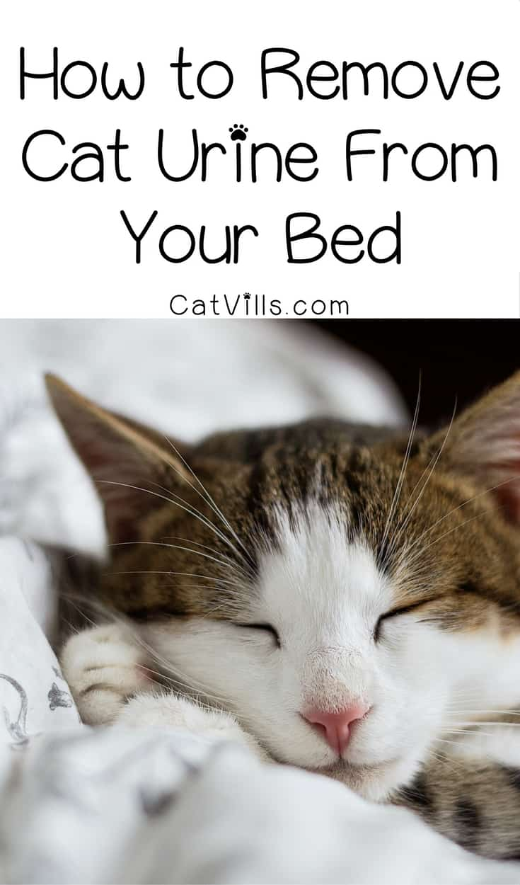 There is nothing worse than the smell of cat urine, especially on your bed! Find out how to zap the odor fast & effectively.