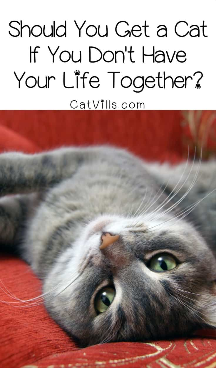 Should you get a cat when you can't take care of yourself? The answer may seem pretty obvious, but there's more to it! Check it out!