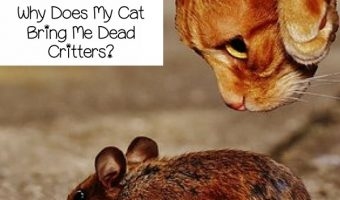 Why Does Your Cat Bring You Dead Critters?