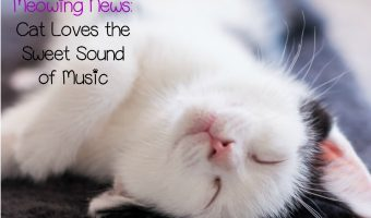 This Cat Loves the Sweet Sound of Music So Much He Makes His Own!