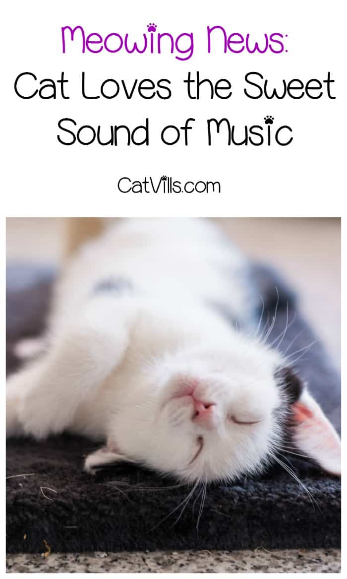 We just love this cat news story about a kitty with a very unique talent! Check out just how much this cat loves the sweet, sweet sound of music!