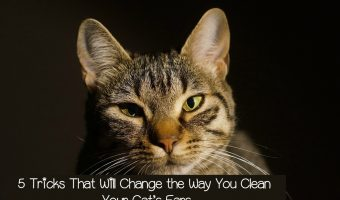 5 Tricks That Will Change the Way You Clean Your Cat's Ears