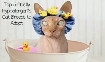 5 Best Cat Breeds for Those with Allergies