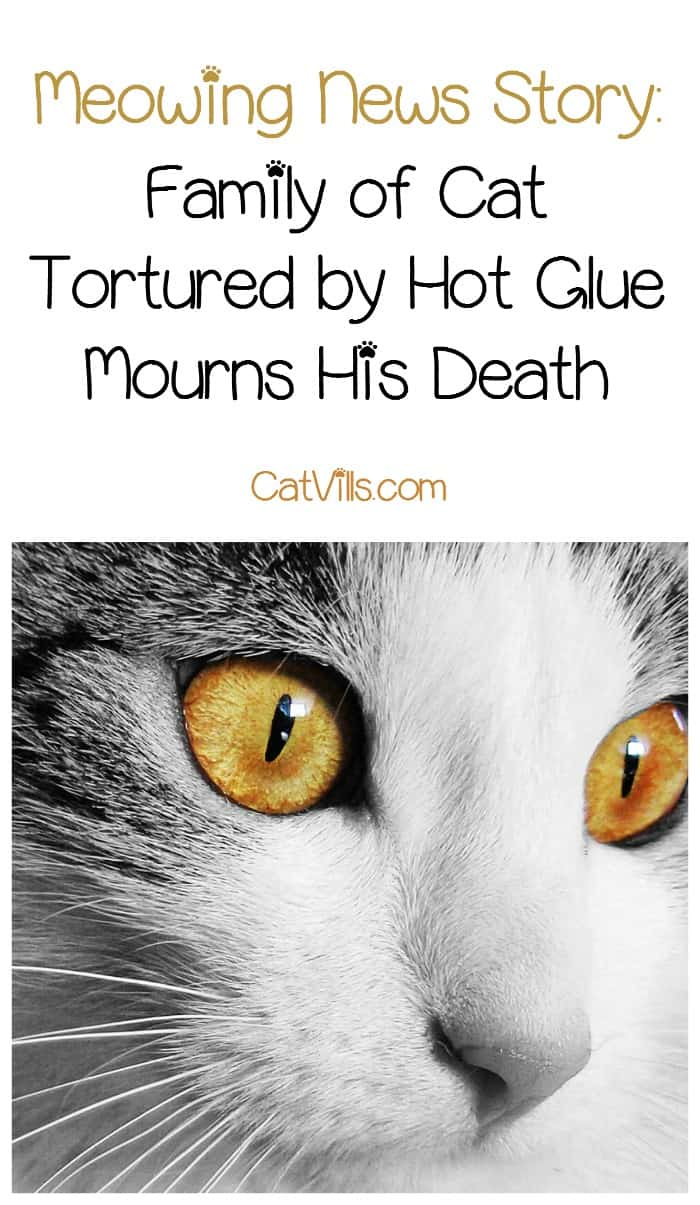 Family mourns the death of their beloved cat after he was tortured with hot glue in this heartbreaking and disturbing cat news story.