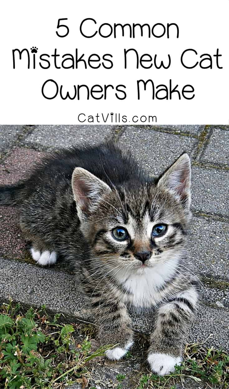 We all want to do what's best for our kitties, and we all make mistakes along the way. Learn from these 5 most common mistakes new cat owners make! Check them out!