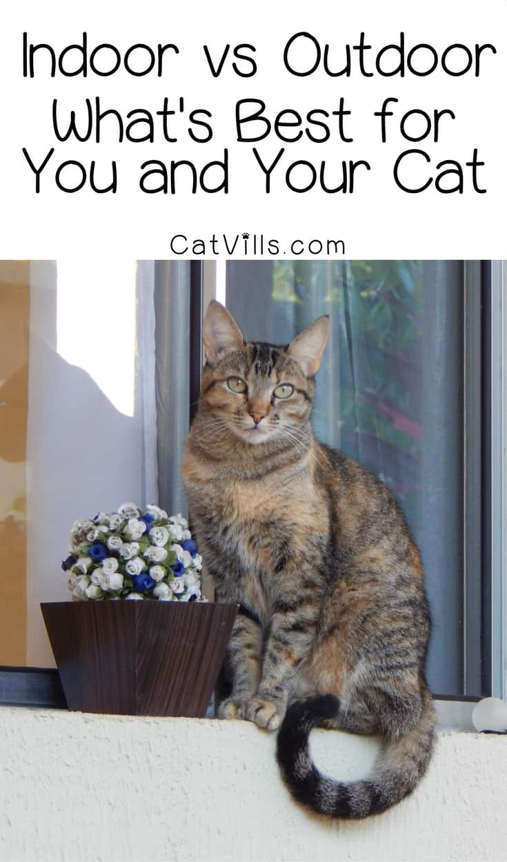 Indoor cat vs outdoor: which is best for your cat? You probably know the answer, but do you know why? Check out the pros and cons of both!