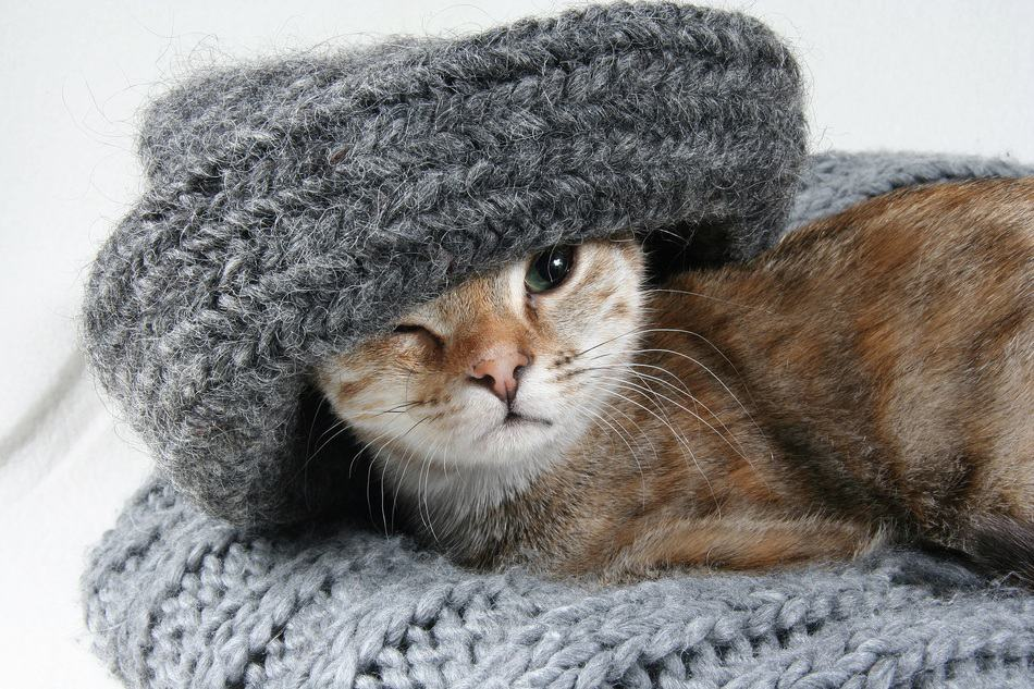 No Rhymes Here! 11 Super Stylish Cats in Hats