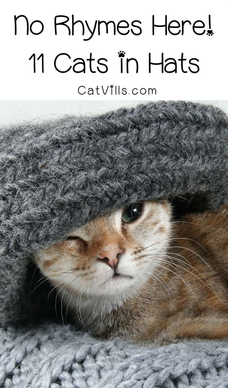 No rhymes here, just 11 super stylish cats in hats that are so insanely adorable, they'll totally steal your heart! Check them out for a daily dose of cute!