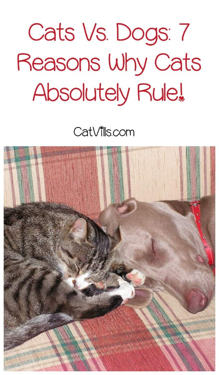 Time for a fun round of cats vs dogs! We say cats rule the roost, how about you? Check out our friendly debate and join in the fun!