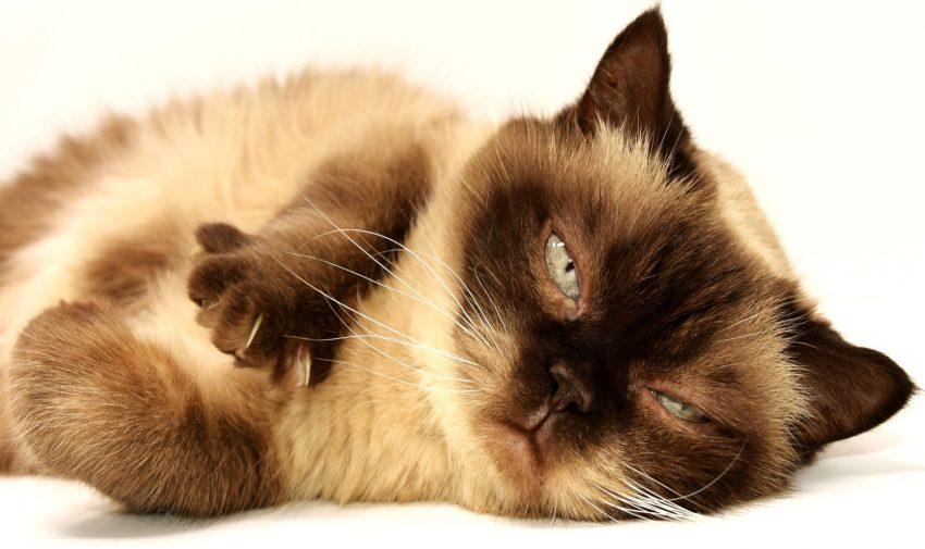 a crazy catnipped cat staring to oblivion