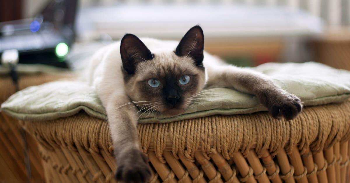 Резултат слика за cats cute
