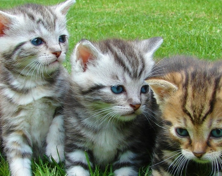 Disappearing Kittens: Where Did They Go?