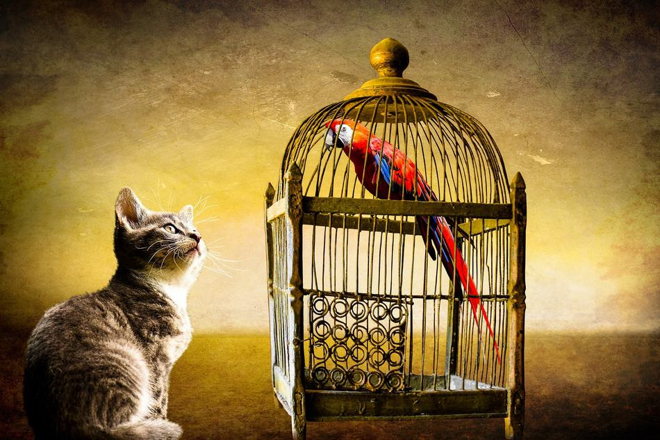 Can cats and birds live together in harmony? Find out if your cat is a danger to your pet bird!