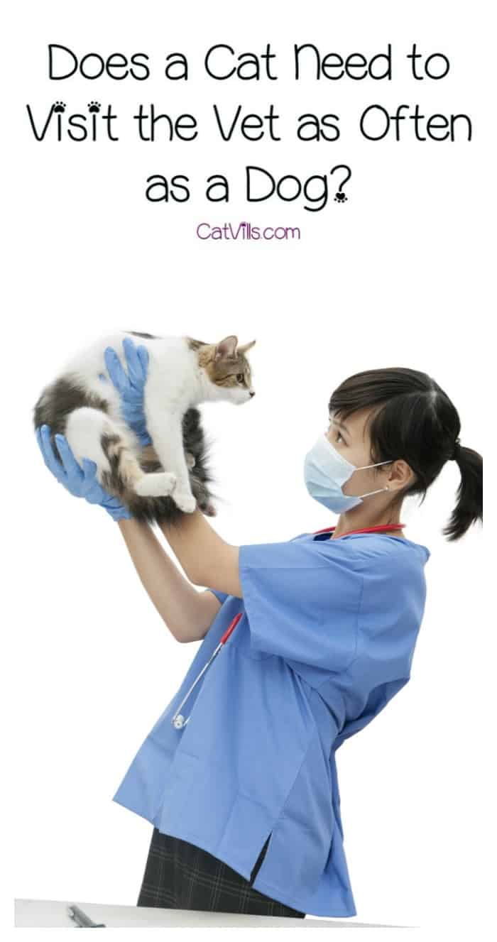 Does a cat need to visit the vet as often as a dog? Find out just how often you can expect to take kitty to the doc!