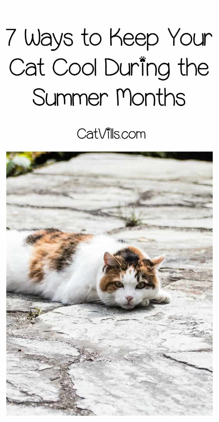 Your cat doesn't need central AC to stay chilled in the heat! Check out these 7 ways to keep your cat cool during the summer months!