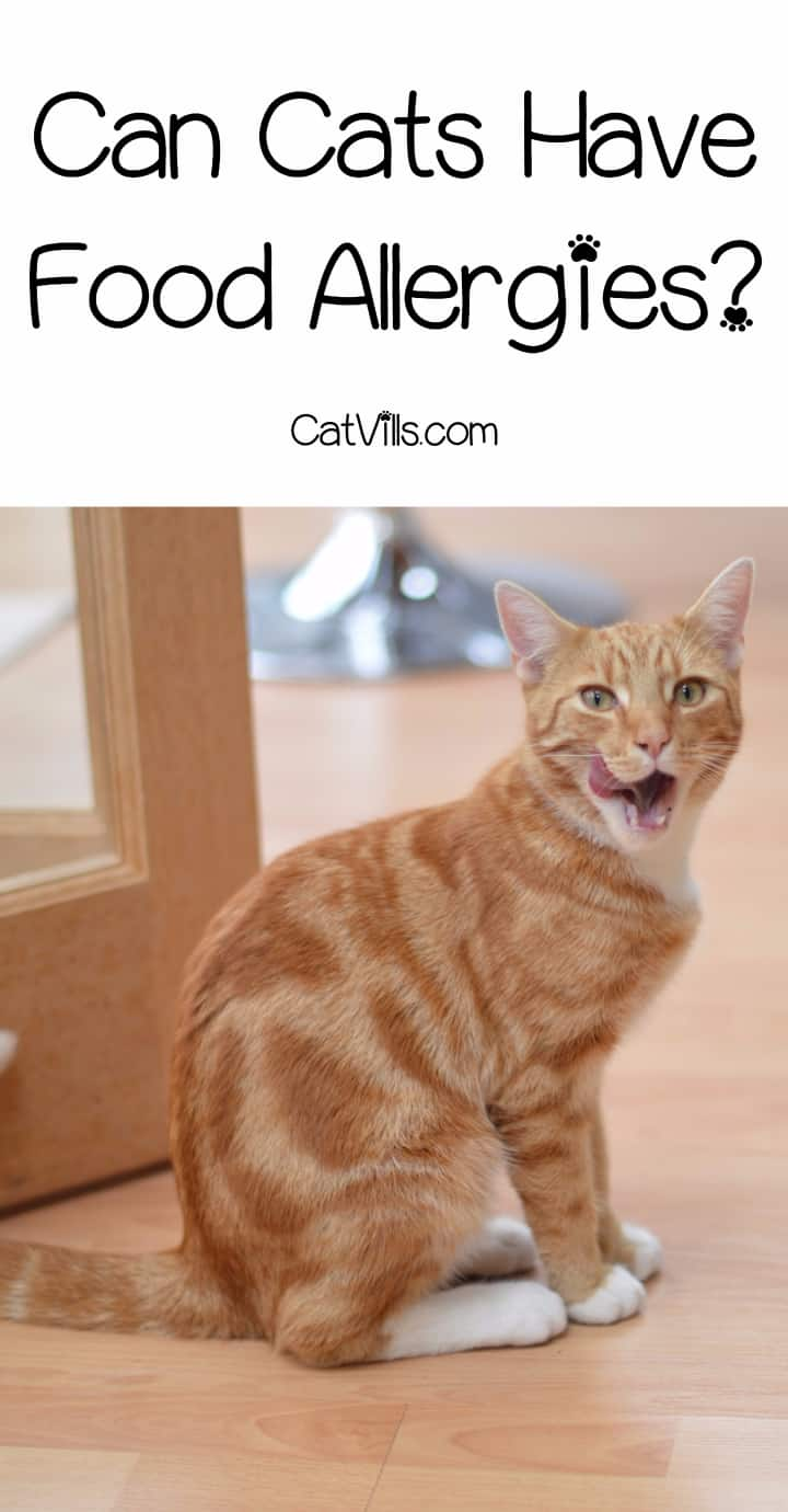 We know dogs can get severe food allergies, but what about kitties? Find out everything you really need to know about food allergies in cat!