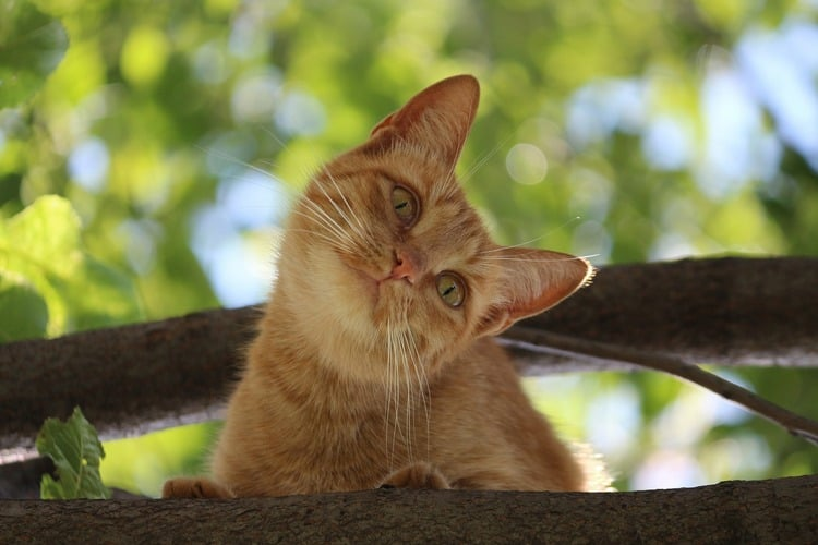 4 Ways to Answer the Question Are Cats Intelligent? - CatVills