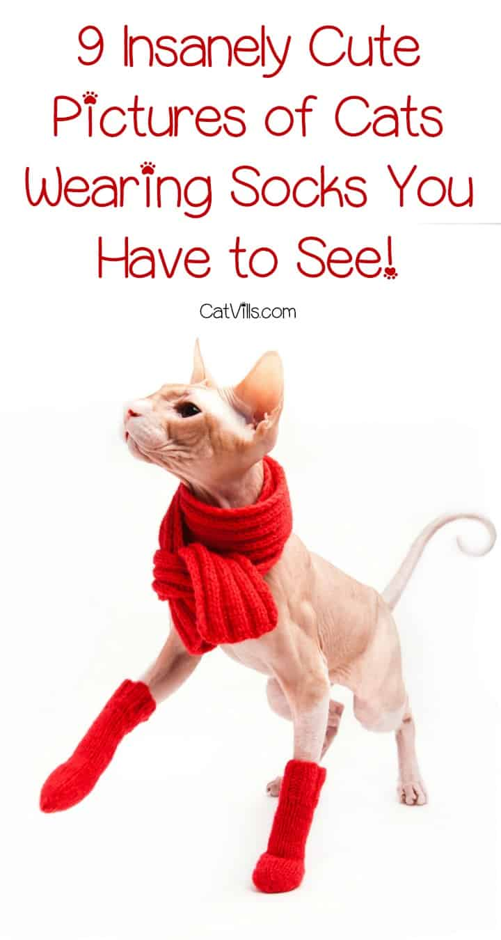 Forget the Cat in the Hat, we're all about these cute cats with socks! Adorable! Check them out when you need to smile!