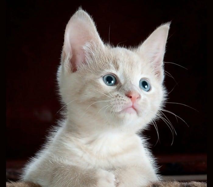 Cat Behavior: Why Do Kitties Like To Lay On Random Things?