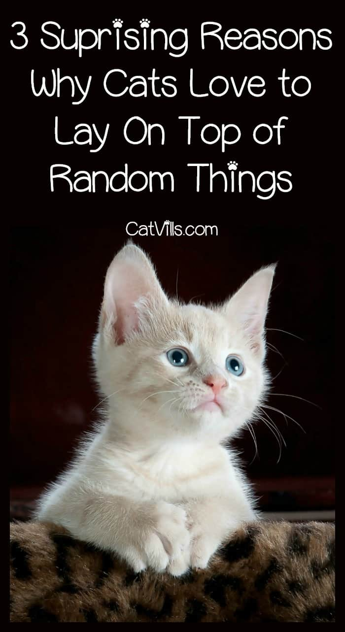 What is up with cats and their love of laying on top of random items? Find out three theories to this strange cat behavior!