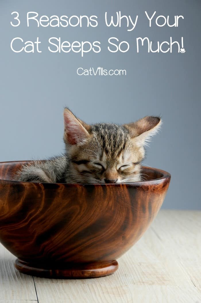 Why do cats sleep so much? Check out 3 reasons why catnapping is your kitty's favorite hobby!