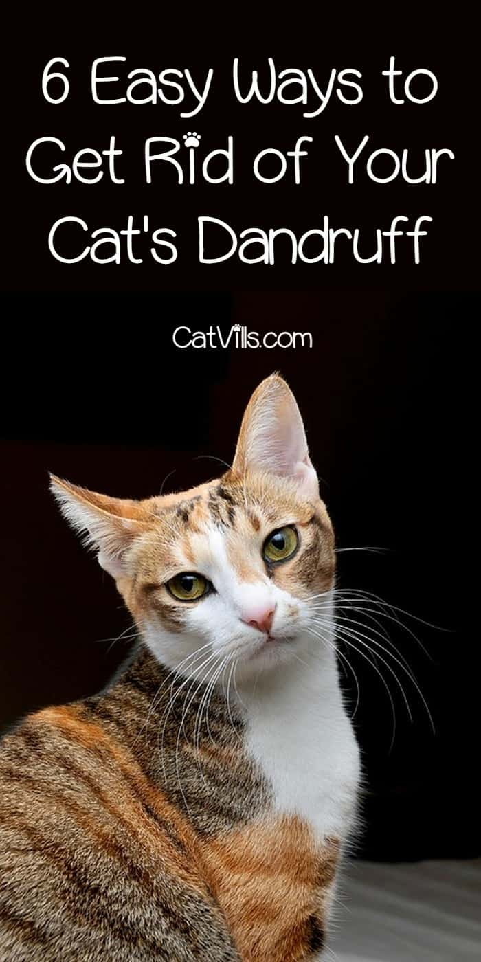 How To Get Rid Of Cat Dandruff At Home