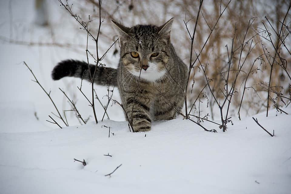 Will Your Kitty Turn Into a Guard Cat When You're In Danger?